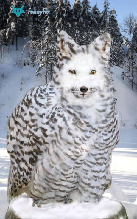 Renard-Fang des neiges !