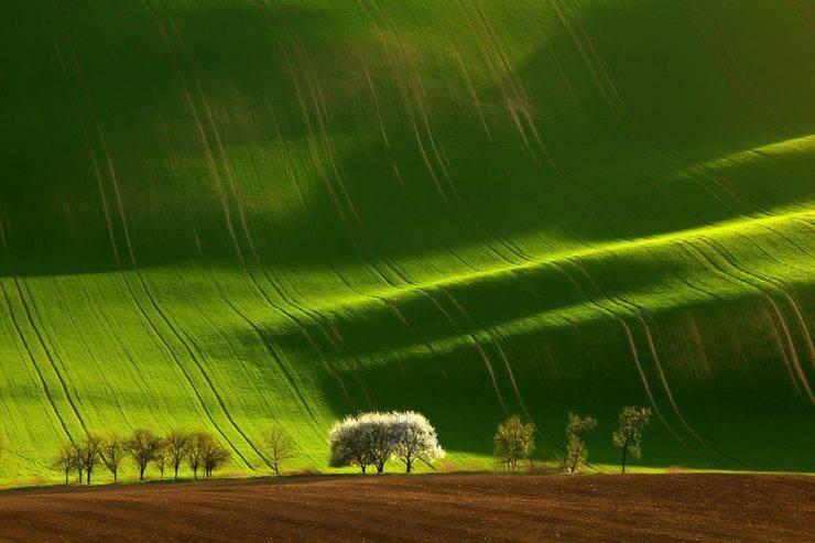Magia zielonych pól 3