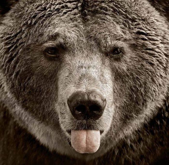 Niedźwiedzie 10