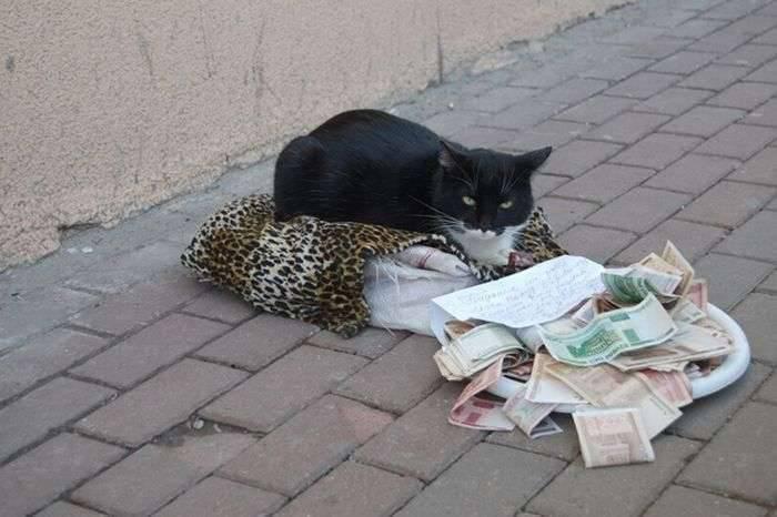 Kot żebrak 3