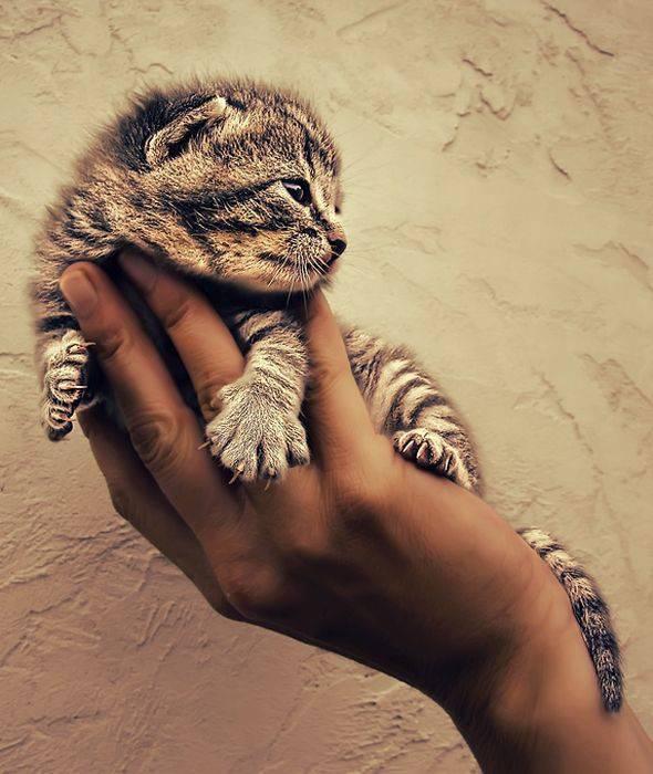 Słodkie kociaki 63