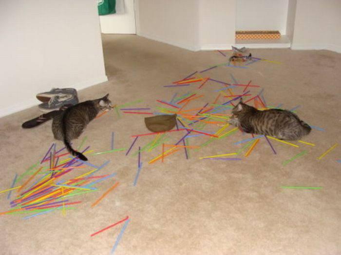 Nieznośne koty 33