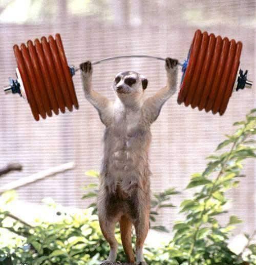 Śmieszne zdjęcia zwierząt #2 81