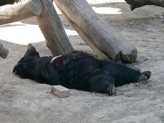 Niedźwiedzie 58