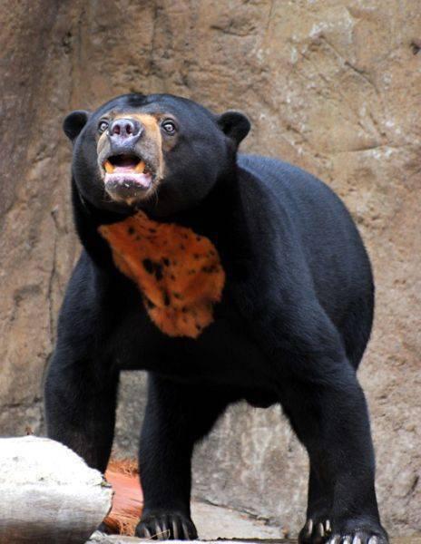 Niedźwiedzie 37