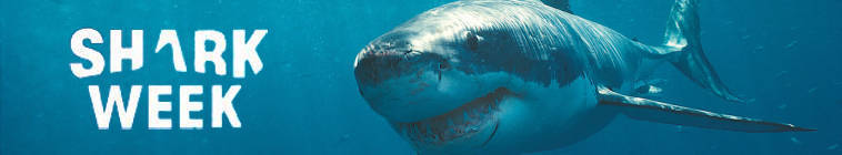 Shark Week 2013 Megalodon The Monster Shark Lives HDTV XviD-AFG