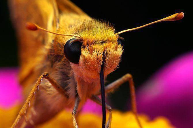 Makrofotografia - owady z bliska 4