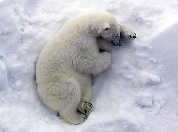 Arktyczna podróż atomowym lodołamaczem 29
