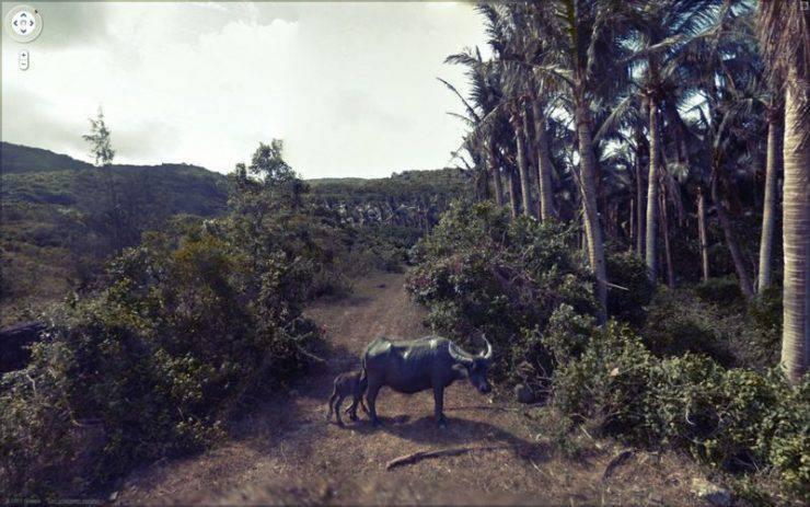 Najdziwniejsze zdjęcia z Google Street View #3 24