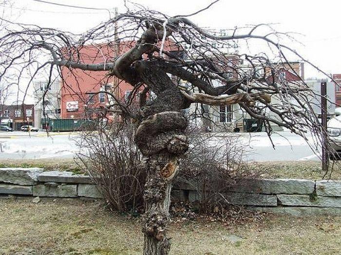 Dziwne drzewa 16