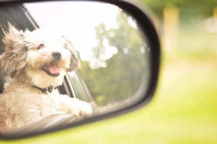 Psy w samochodach 34