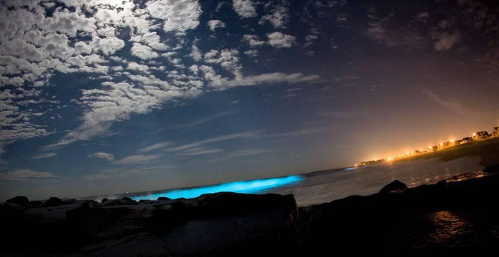 Bioluminescencja 4