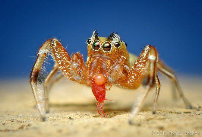 Makrofotografia - owady z bliska 54