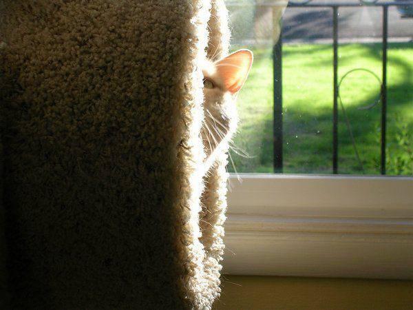 Przyczajone koty #2 27