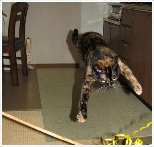 Kocie skoki 8