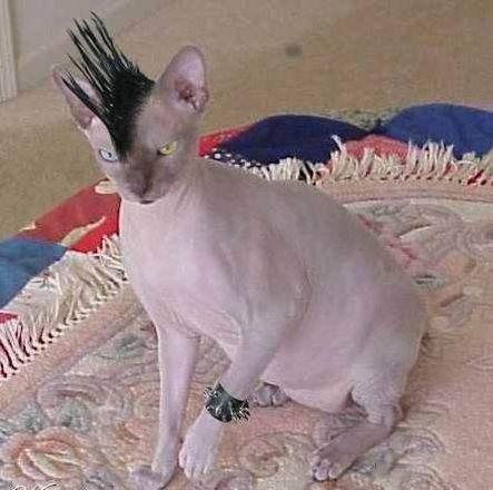 Śmieszne zdjęcia kotów #2 49