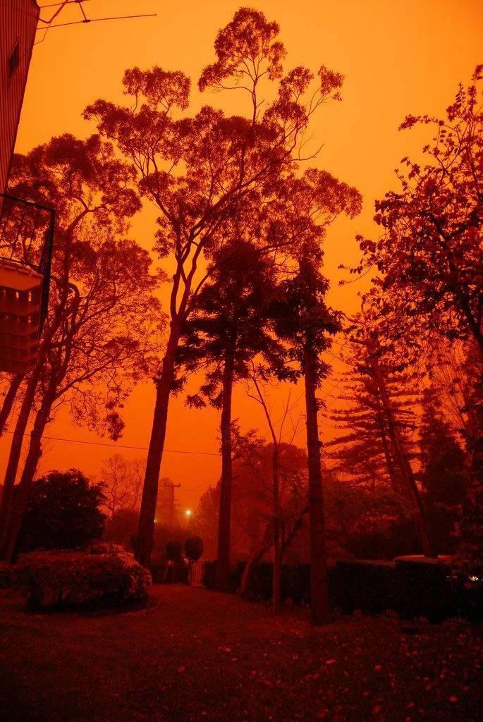 Pomarańczowe Sydney 32