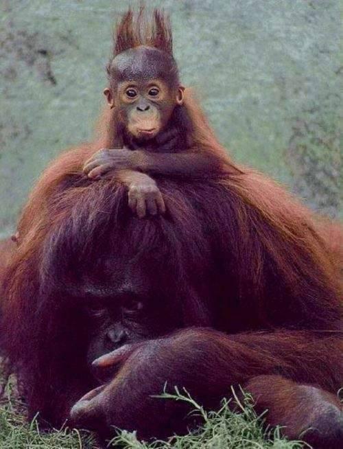Śmieszne zdjęcia zwierząt #2 10