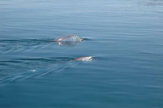 Dziwnie długa ryba 2