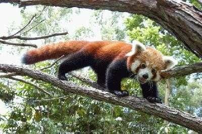 Najdziwniejsze zwierzęta świata 32