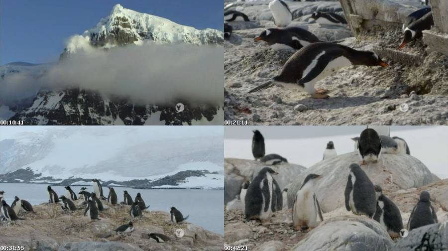 Nature S33E05 Penguin Post Office Images,Pictures,Photos,Screenshots,Preview