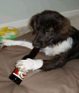 Zwierzaki i alkohol 8