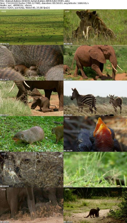 Animal Babies S01E01 Safari Babies WEB h264-ROFL