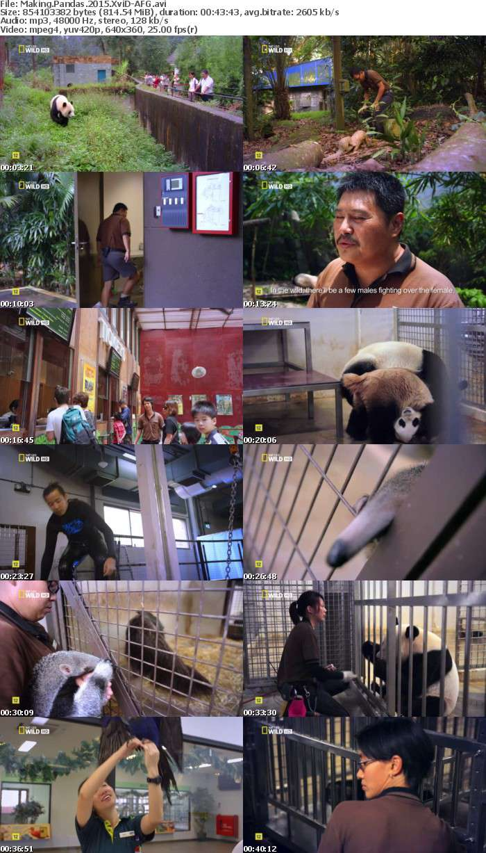 Making Pandas 2015 XviD-AFG