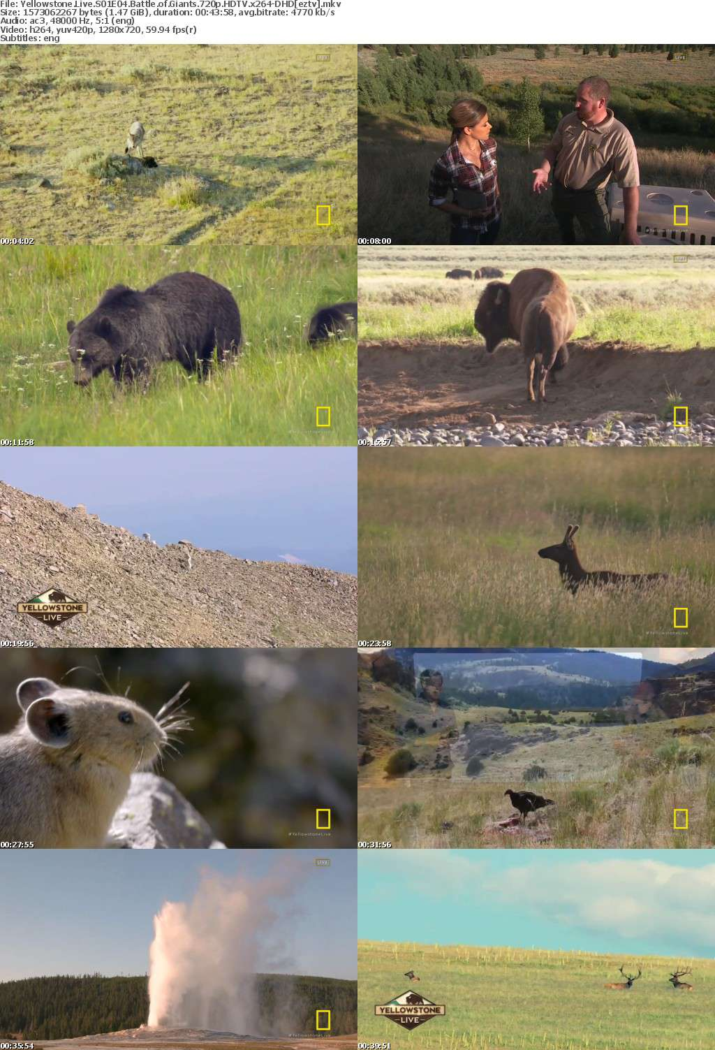 Yellowstone Live S01E04 Battle of Giants 720p HDTV x264-DHD
