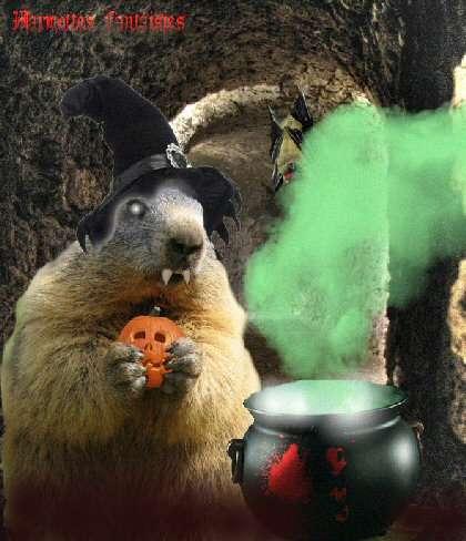 Une marmotte sorcière ! ;)