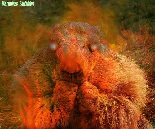 Une marmotte démoniaque ;)
