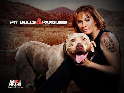 Pit Bulls and Parolees S12E05 A Clean Slate 720p WEB x264-CAFFEiNE