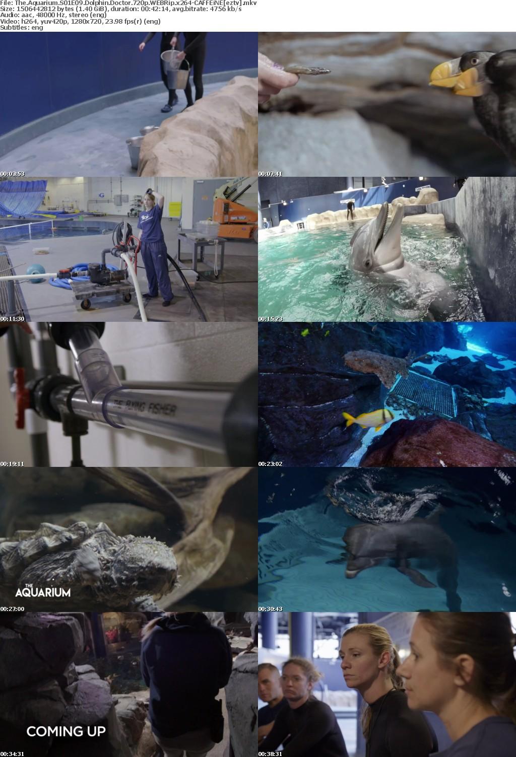 The Aquarium S01E09 Dolphin Doctor 720p WEBRip x264 CAFFEiNE