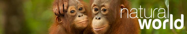 Natural World S34E16 Jungle Animal Hospital 720p HDTV x264 UNDERBELLY