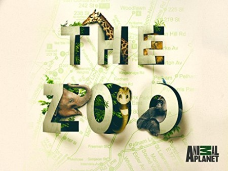 The Zoo US S04E03 Tigers Day at the Dentist 480p x264-mSD