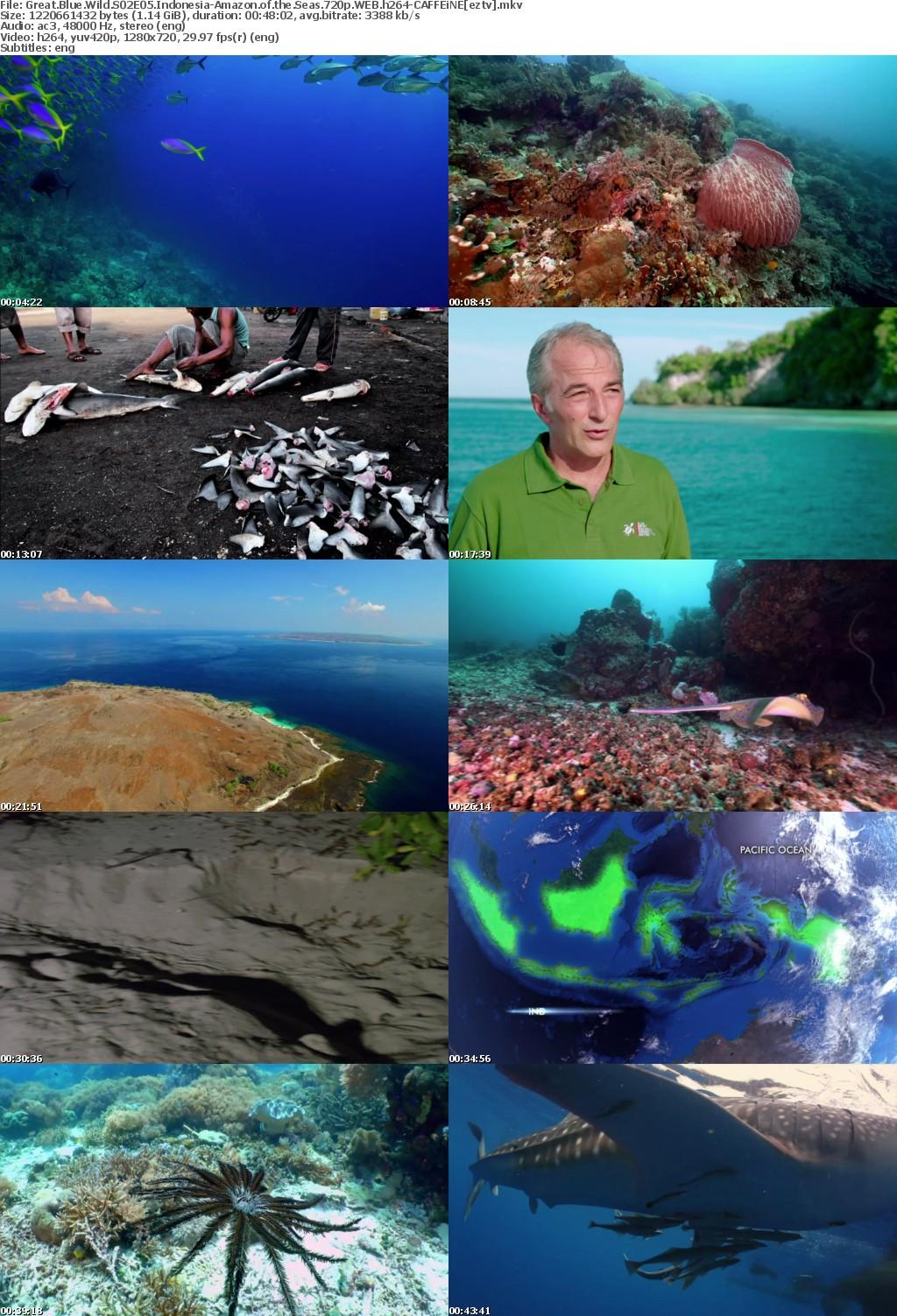 Great Blue Wild S02E05 Indonesia-Amazon of the Seas 720p WEB h264-CAFFEiNE